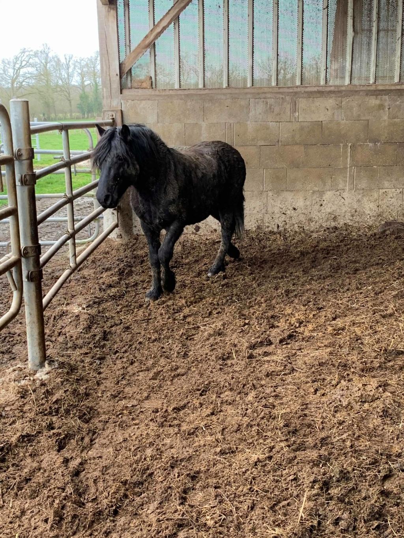 KIERO - poney entier noir -  84189311