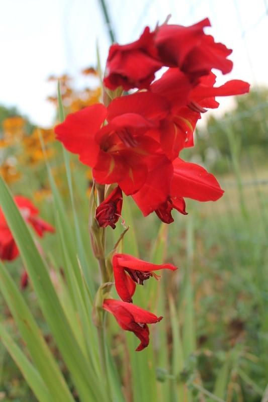 petits bouquets de juillet - Page 3 Natyra15