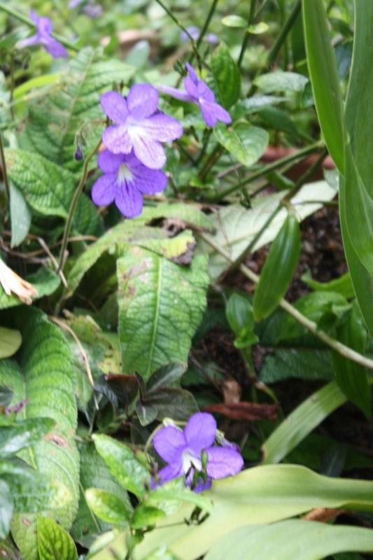 Quelques tropicales en fleurs, en ce moment Stepto10