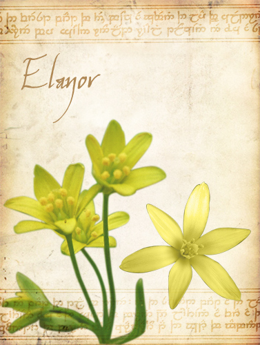 ouistiti - Page 5 Elanor10