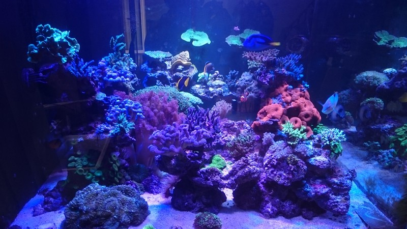reef cube by hotmars - Page 15 Dsc_0016
