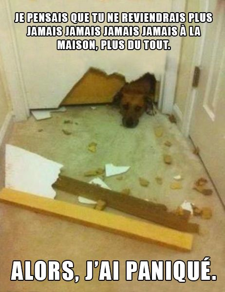 HUMOUR - blagues - Page 6 524b2210