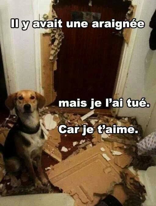 HUMOUR - blagues - Page 19 6f9d6c10