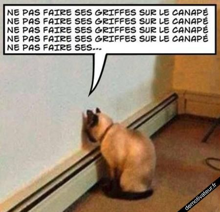 HUMOUR - blagues - Page 20 84075210