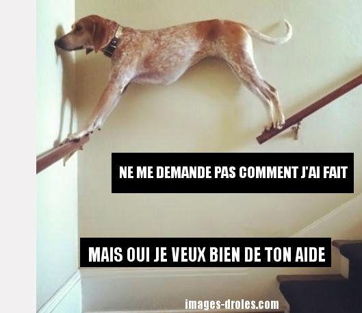 HUMOUR - blagues - Page 2 Ab3b6c10