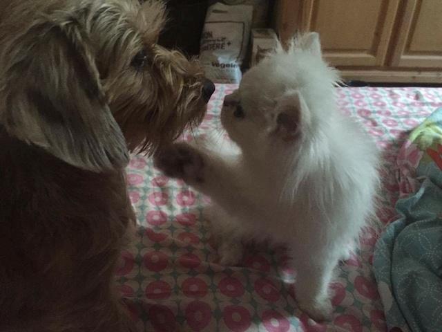 "Photos et anecdotes de nos ""chiens parfaits"" Image71"