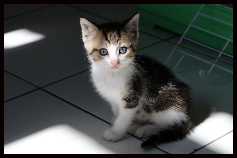 Pas de chats sans toit (79) Img_6810