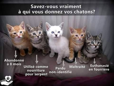 LES CHATONS 11143410