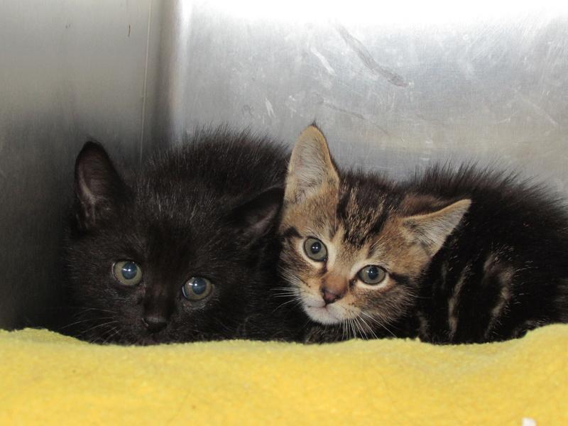 MIKO et NESTEA 2 petits chatons Img_2119