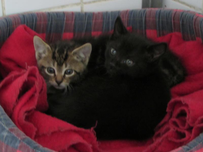 MIKO et NESTEA 2 petits chatons Img_2244