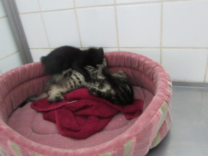 Arrivée de 4 chatons Pumba, Mario, Pépito et Pilou Img_2342