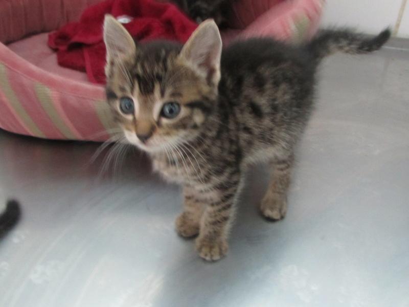 Arrivée de 4 chatons Pumba, Mario, Pépito et Pilou Img_2348