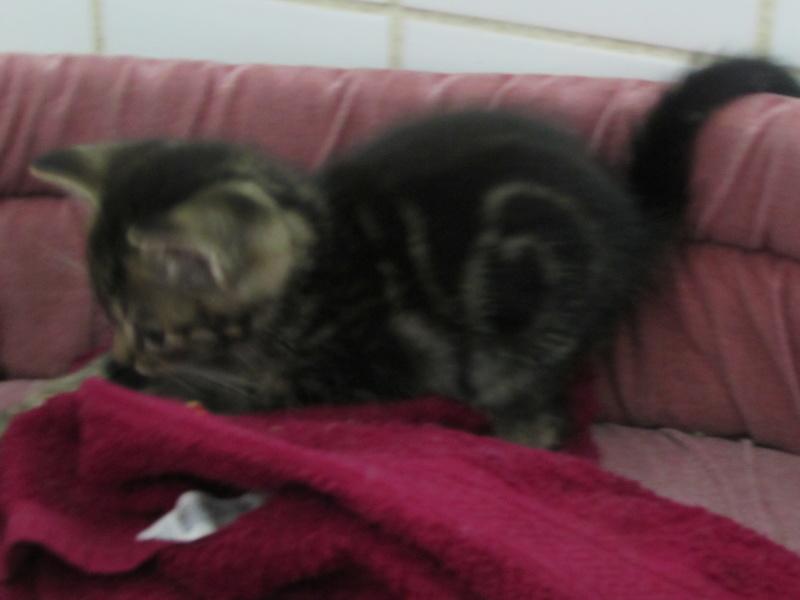 Arrivée de 4 chatons Pumba, Mario, Pépito et Pilou Img_2349