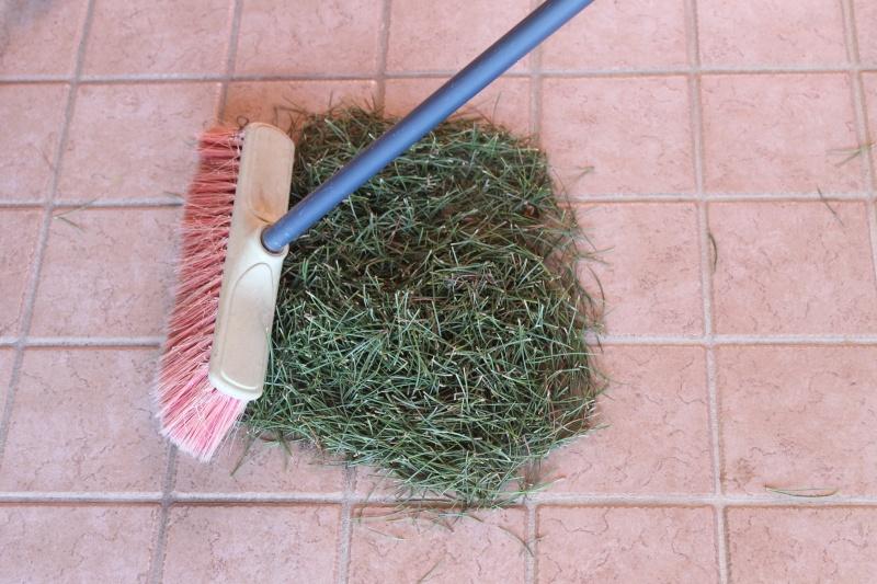 Settembre pulizia aghi pino 15-09-15