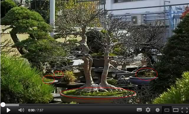Qualità dell'akadama da un video su internet Muschi10