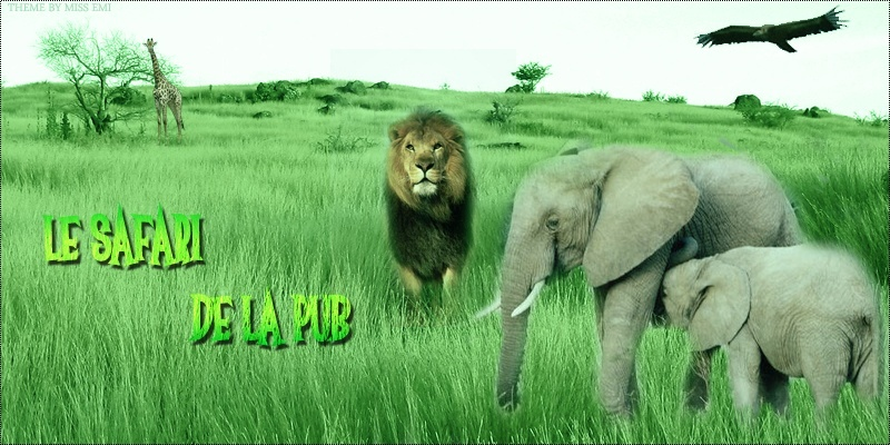 Le safari de la pub