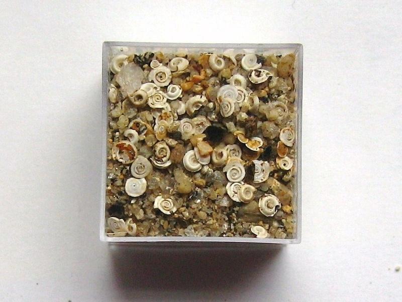 petits escargots? 00113