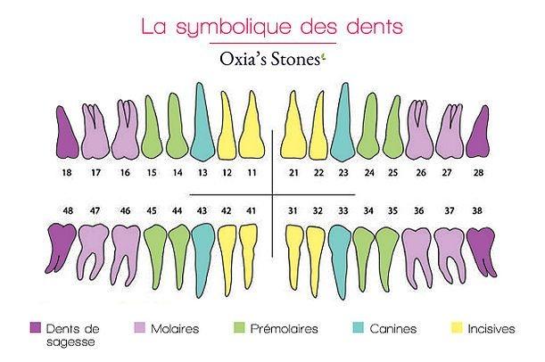 La symbolique des dents Image15