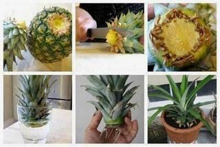 11 Légumes à faire repousser chez vous Image21