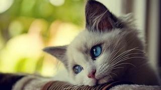 Les chats ont une mission dans notre vie Image22