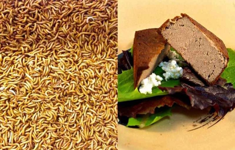 Les insectes, une alimentation d'avenir? Image25