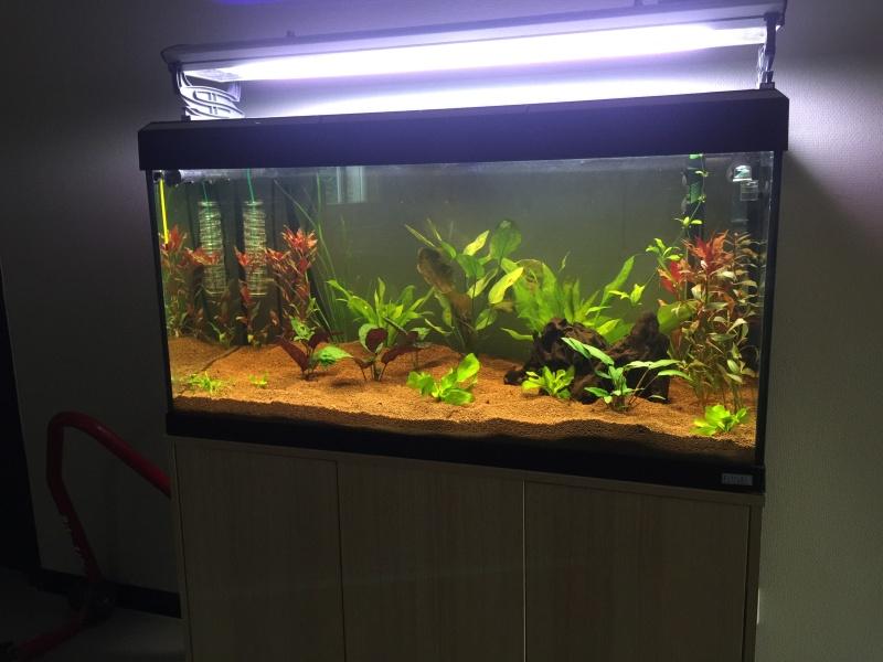 Reprise de l'aquariophilie, projet bac amazonien 200L  Img_1810