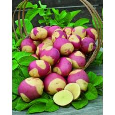 Patates 2 couleurs Pomme_10