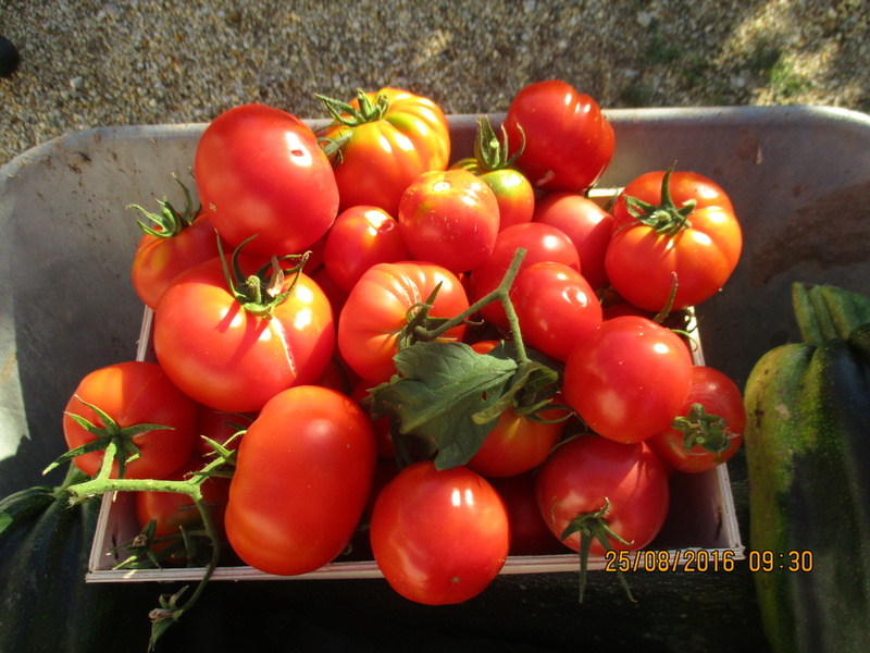 Tomates - Page 37 Img_1025