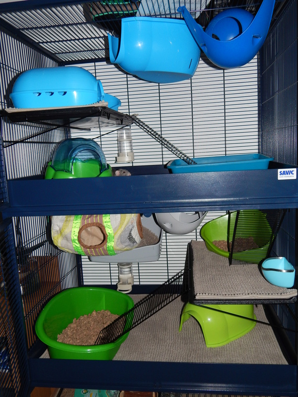 Aménagement cage savic royal Dscn2110