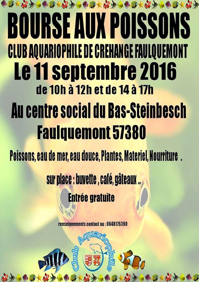 Bourse à Créhange Faulquemont (57) - 11 septembre 2016 13988110