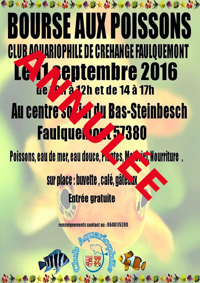 Bourse à Créhange Faulquemont (57) - 11 septembre 2016 Bourse10