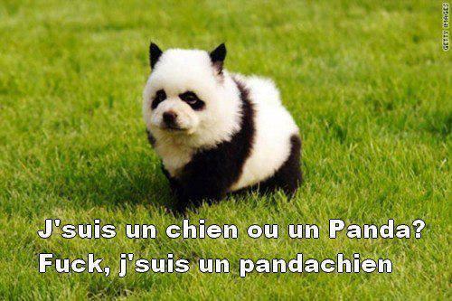 Comment devenir un panda ? 13600310