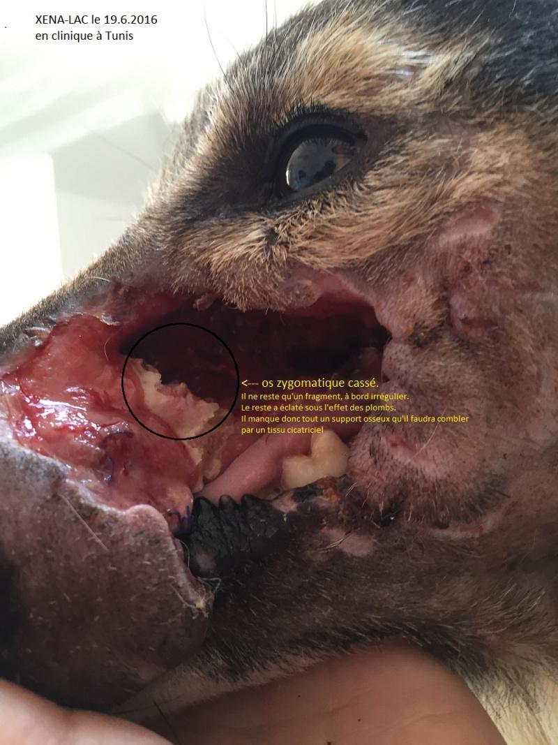 XENA-LAC, identifiée 788.269.100.001.338, en clinique à Tunis - Page 2 Img_4713
