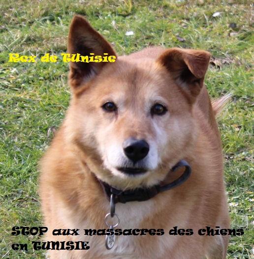 MASSACRES à CIEL OUVERT en Tunisie - Page 3 Rex_st10