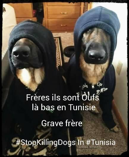 MASSACRES à CIEL OUVERT en Tunisie - Page 2 Stop_o10