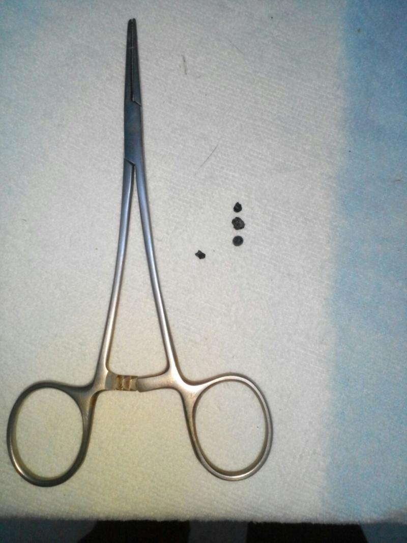 XENA-LAC, identifiée 788.269.100.001.338, en clinique à Tunis - Page 2 Xena_c14