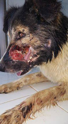 XENA-LAC, identifiée 788.269.100.001.338, en clinique à Tunis Xena_l19
