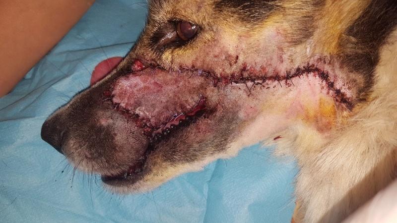 XENA-LAC, identifiée 788.269.100.001.338, en clinique à Tunis - Page 2 Xena_o14