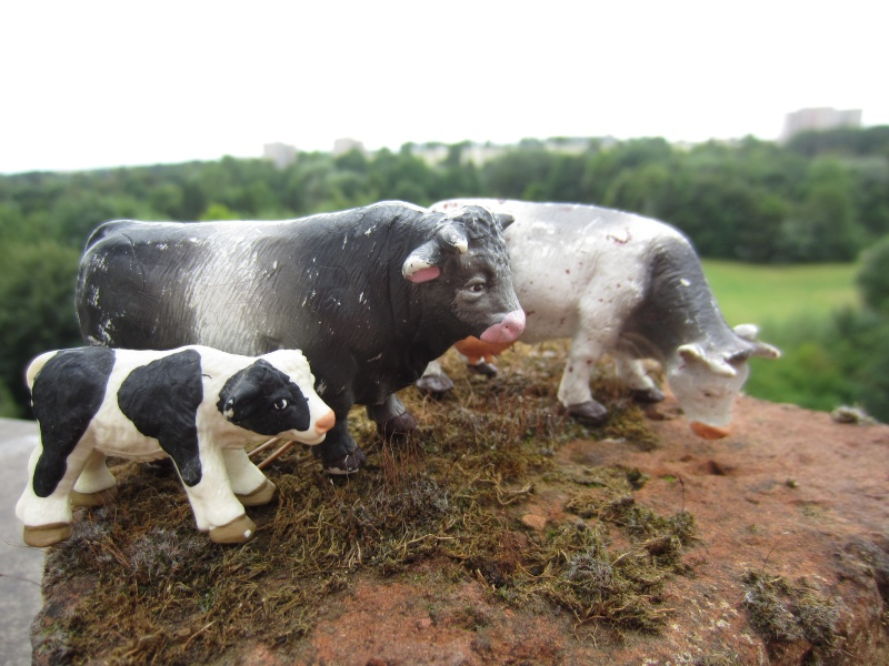 The small cattle from Bullyland :-) Img_8520