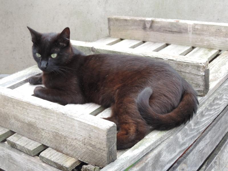 lanfeust - Lanfeust, mâle noir, type européen, né le 01/06/2015 0111