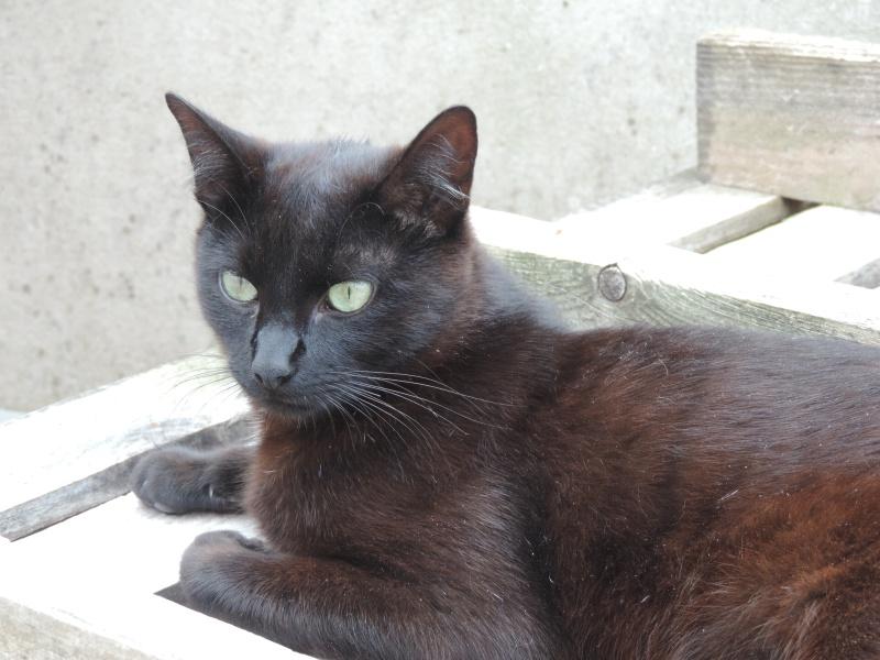 lanfeust - Lanfeust, mâle noir, type européen, né le 01/06/2015 0212