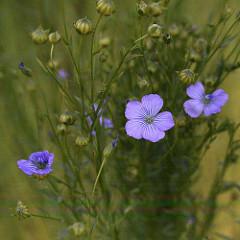 Une nouvelle fleur en plein questionnement 28072710