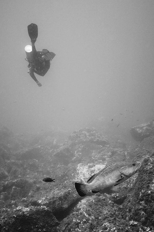 Réserve sous-marine du cap de Creus P1080210