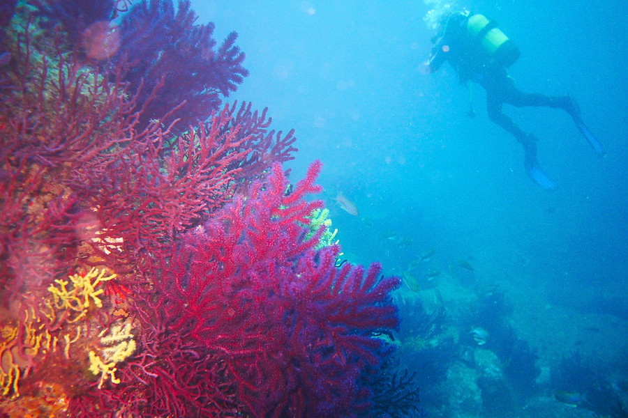 Réserve sous-marine du cap de Creus P1080412