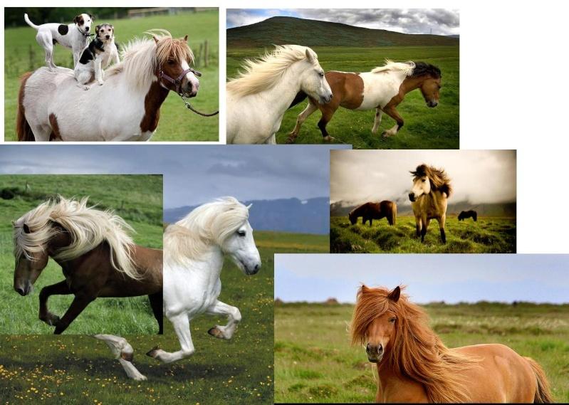 Model horse photo show Pony_s10