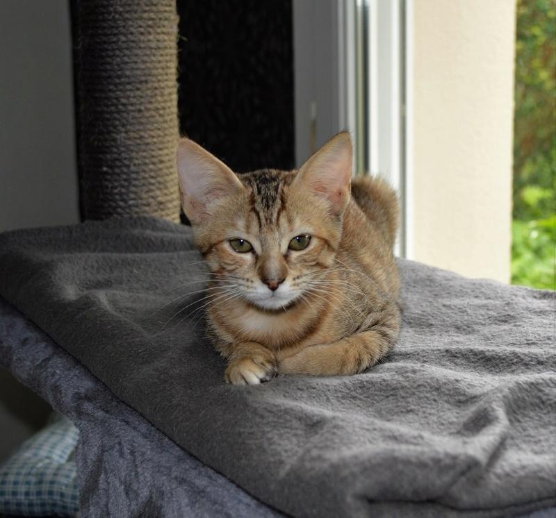 margotte - MARGOTTE, chatonne tigrée et rousse, née le 05.04.16 Dsc_0055