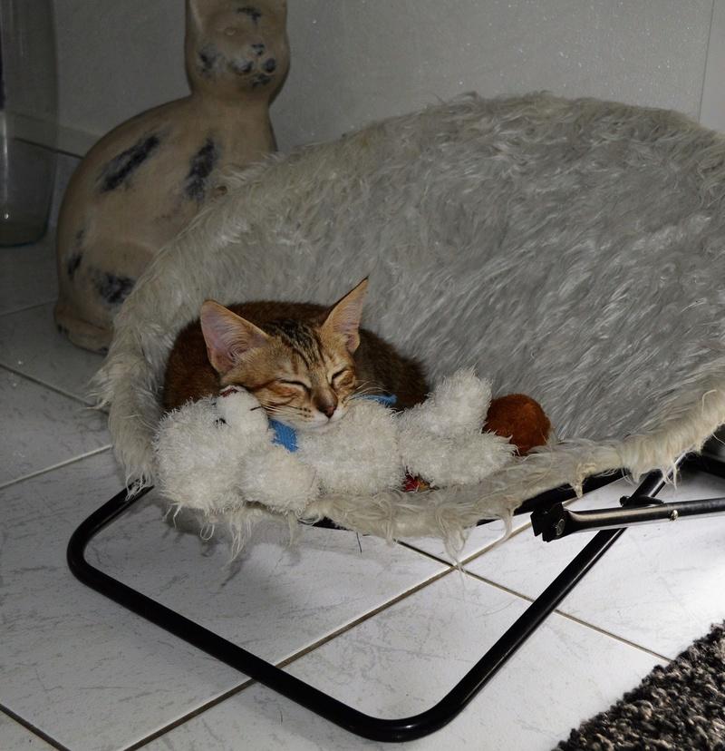 margotte - MARGOTTE, chatonne tigrée et rousse, née le 05.04.16 Dsc_0059