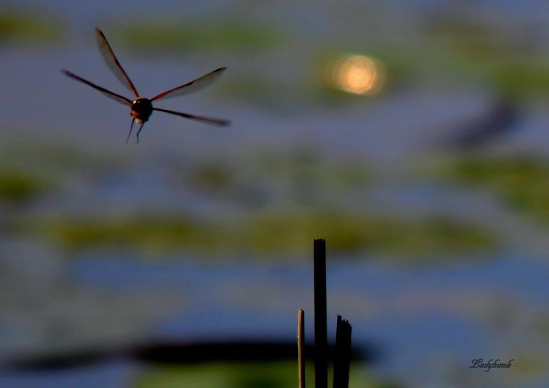 l'étang Img_8511
