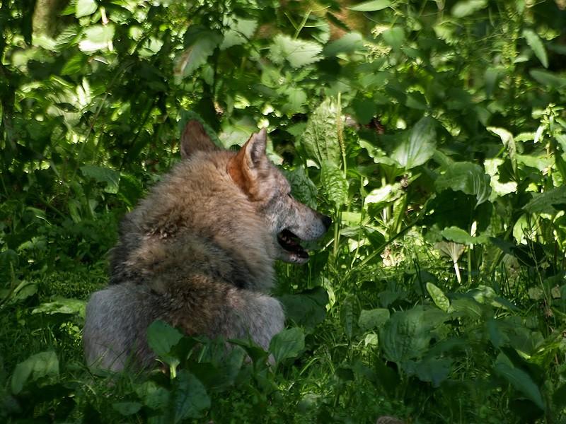 promenons-nous dans les bois .. P7078112
