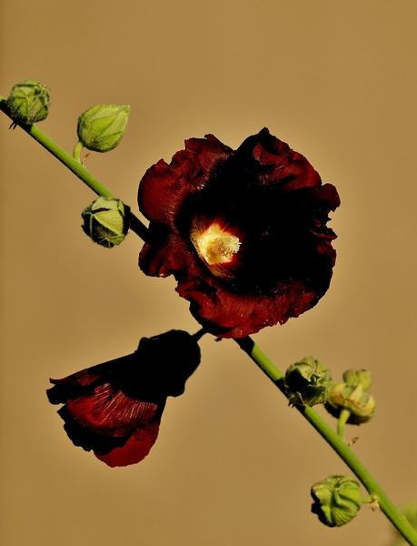 une flore P7319811